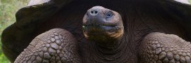 GALAPAGOS Safari Tours